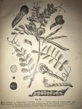 1906 Кормовые Растения редкая книга для Арендаторов