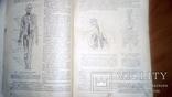 Анатомия людини 1939г, фото №4