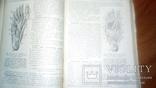 Анатомия людини 1939г, фото №6