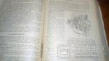 Анатомия людини 1939г, фото №8
