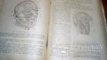 Анатомия людини 1939г, фото №9