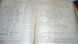 Анатомия людини 1939г, фото №10