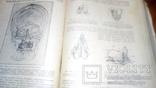 Анатомия людини 1939г, фото №11