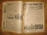 """Журнал """"Всемирная Новь"""" + """"Сад, птицы и комнатное цветоводство"""", № 16, 1911 год, фото №8"""
