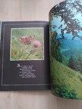 Шовкова косиця (фотоальбом про Карпати) 1985р., фото №7