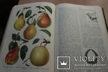 Українська Радянська Енциклопедія  1959року 16 томов, фото №4