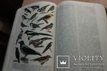 Українська Радянська Енциклопедія  1959року 16 томов, фото №11