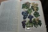 Українська Радянська Енциклопедія  1959року 16 томов, фото №12