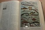 Українська Радянська Енциклопедія  1959року 16 томов, фото №13
