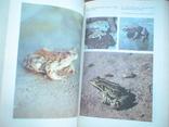 Террариум и его обитатели 1991р., фото №5