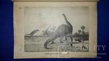 1914 Реклю - Земля в мировом пространстве, фото №2