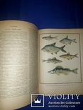 1971 Настольная книга рыболова-спортсмена, фото №7