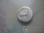 """Домициан """"пегас"""" photo 6"""