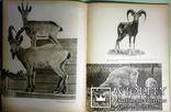 1960 Зоопарк в иллюстрациях. Аскания-Нова