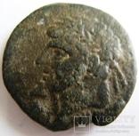Нумидия, г. Масинисса, AE 29 (208-148 гг. до н.э.)