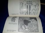1981 Курганы. Находки и проблемы photo 1
