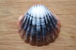 Мыло ручной работы -Морская раковина- с ароматом арбуза 74 г, фото №2