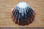 Мыло ручной работы -Морская раковина- с ароматом арбуза 74 г, фото №3