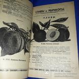 1914 Иллюстрированный каталог садового заведения 'Помона'