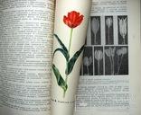 1962 Тюльпаны. Морфология, цитология и биология 2000 экз.