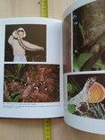 "Янош Регеш ""Зеленый ад, исчезающий рай"" (тропический лес) 1989р., фото №11"