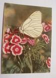 "Г. 1958, открытка ""Гвоздики"", худ. Ф. Федорова, фото №2"