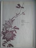 Двадцать семь японских гравюр 18-19 вв., фото №9