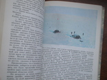 """Орлов """"Острова затеряные во льдах"""" 1979р., фото №5"""