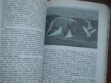 """Орлов """"Острова затеряные во льдах"""" 1979р., фото №6"""