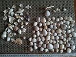 Ракушки морские, много, фото №2
