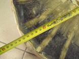 Африка панцирь черепахи, вес 1,19 кг, фото №13