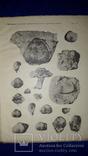 1915 Палеонтологические заметки 31.5х25 см.