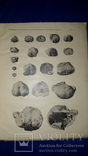 1915 Палеонтологические заметки 31.5х25 см., фото №9