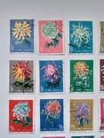 1960 г. Китай Хризантемы (полная серия) photo 2