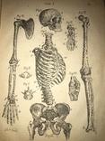 1883 Человеческое Тело Анатомия с политипажами