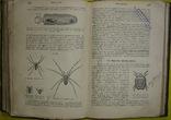 1898 Учебник зоологии. Рихард Гертвиг. Одесса photo 6