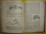 1898 Учебник зоологии. Рихард Гертвиг. Одесса photo 7