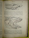 1898 Учебник зоологии. Рихард Гертвиг. Одесса photo 9