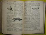 1898 Учебник зоологии. Рихард Гертвиг. Одесса photo 11