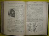 1898 Учебник зоологии. Рихард Гертвиг. Одесса photo 12