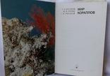 Мир коралов, фото №3