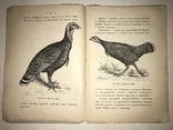 1913 Индейка Промысловое Птицеводство