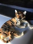 Тигр photo 3