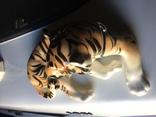 Тигр photo 4