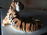 Тигр photo 5