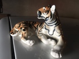 Тигр photo 1