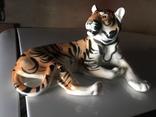 Тигр photo 6