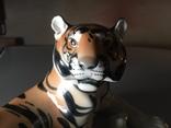 Тигр photo 7