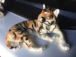 Тигр photo 9