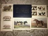 Коровы Лошади Редкий Огромный Альбом 45/32 Соцреализм, фото №2